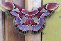 Birds, butterflies, moths and bugs