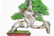 bonsai picture