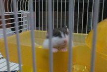 My Hamster <3