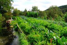 Přírodní, udržitelné zahrady