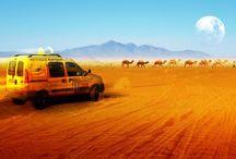 les gazelles mon rêve