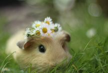 Animals / The cutest animals on earth