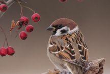 dyr fugle