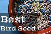 Bird Seed / Suet