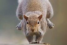 animais acrobatas