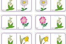 Kwiaty domino