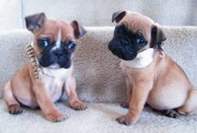 dogs I potentially want♥ / by Autumn Rose
