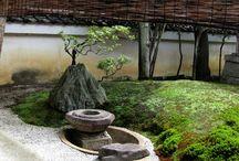 Ogród japoński- Japanese garden