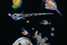 Plâncton