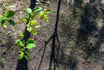 Nature / Plants, trees, gardens, forest, landscape