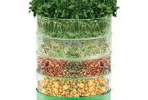Garden - Edible