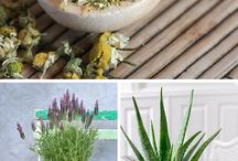Medicinal Houseplants