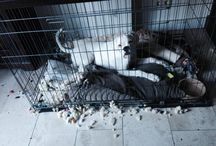 Demolition boxerdogs <3 / by Linda Bruinenberg