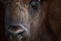 Animals / by Dafne Mejia
