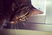 """Mi gato Kun / Fotos de mi gato Kun, un """"bicho"""" que me encanta y me alegra el día a día."""