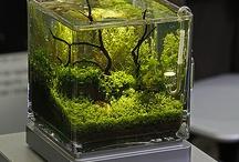 aquarium/vivarium/paludarium