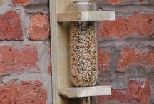 oiseaux du jardin et insectes