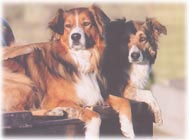 Favorite Dog Breeds / by Teresa Taylor-Sousa