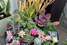 Garden/ plants