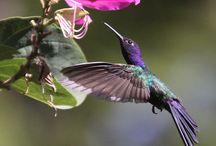 ..flying flowers! / .