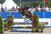 Cohiba VDL / 2006 Approved stallion by Chacco Blue x Acord II x Pilot