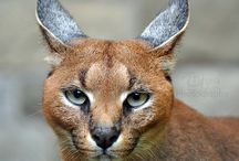 fauna inspiration/reference
