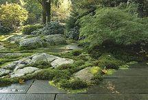 Garden/ patio