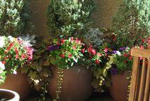 Outdoor garden flowers