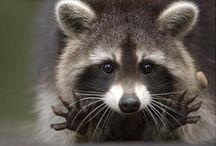 Ahhhhhh ANIMALS / Cute furry and not so furry animals..