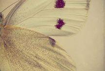 Butterfly & Flowwere