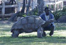 Love Tortoise