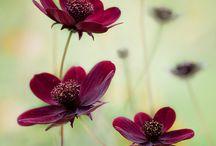 Flowers, Plants & Garden