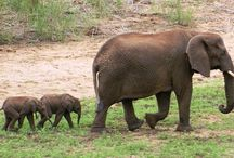 Pongola Game Reserve South Africa