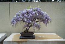 Ornamentals and Bonsai / by Bryan Landry