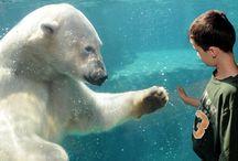 Polar Bears / by Friedel Jonker
