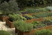 ogród warzywny