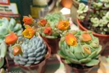 Succulents / Succulent planting ideas / by Belle