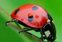 Miss Ladybug / Ladybugs all dressed in red Waltzing through the flower beds... If I were little just like you I'd dance among the flowers too!