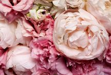 Flowers & Gardens / by Nicola Hunt