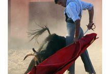 matador torero bullfighter