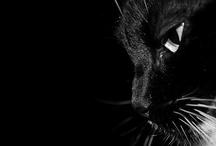 Cat / by hy Lau