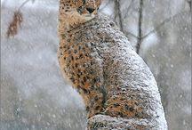 wild big cats / cute cats