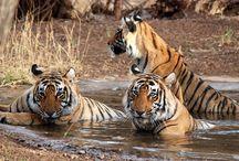 Wildlife Tour in #India