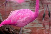 my flamingo obsession