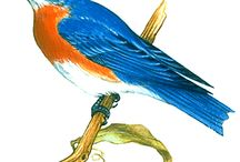 Theme: birds/feathers