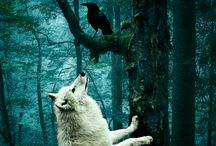 of wolf and raven