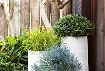 Green wall gardens