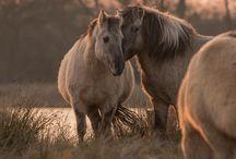 Pferdeverhalten / Natürliches Verhalten von wilden Pferden