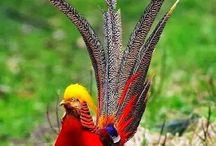 the birds full of colors