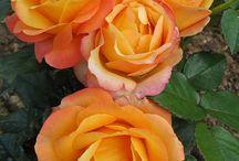 Piękne kwiaty 3